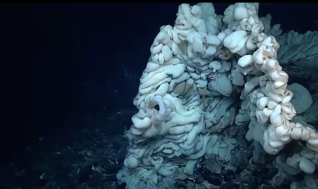 ハワイ沖、2,100メートル深海に史上最大級の新種生物発見のアイキャッチ画像
