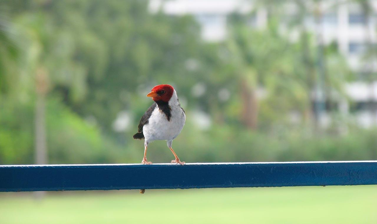ハワイのNG行為!ハワイの鳥に餌をあげたらブランド物が買えるほどの罰金ですのアイキャッチ画像