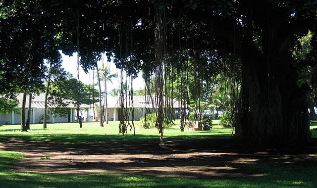 ハワイ島で公園封鎖の事態、デング熱の感染拡大とまらず過去最大180人にのアイキャッチ画像