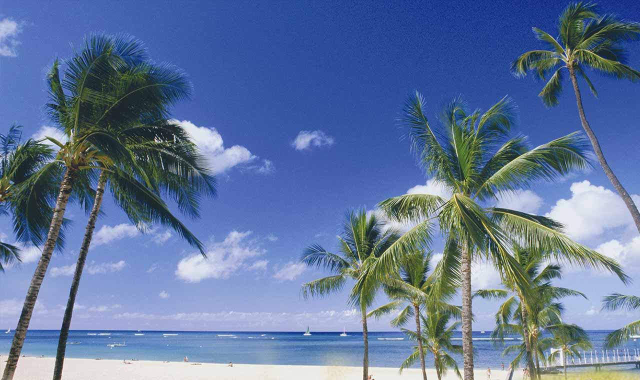 1分で応募完了!羽田─コナ直行便ハワイ島の旅プレゼントキャンペーンのアイキャッチ画像